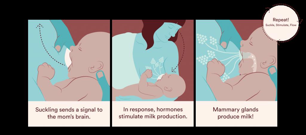 Understanding Breastmilk Production  Boober-9933